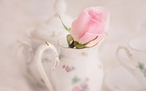 Picture rose, dishes, pitcher