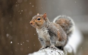 Picture snow, protein, rodent, pet