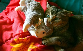 Picture cat, cat, light, red, toy, the game, blanket, bed, lies, sheep