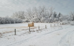 Picture winter, snow, the fence, hay