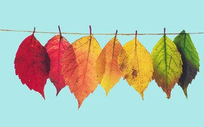 Picture autumn, leaves, yellow, green, red, colorful, rope, blue background, hang, autumn leaves