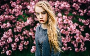 Picture girl, portrait, Linda