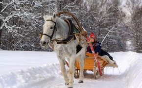 Picture snow, horse, Winter, sleigh