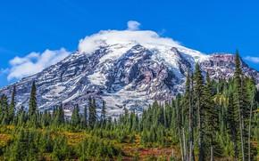 Picture forest, landscape, mountains, nature, Park, USA