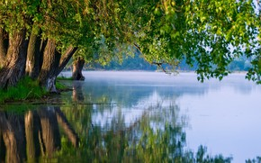 Picture trees, river, nature