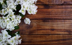 Picture flowers, white, wood, Bougainvillea