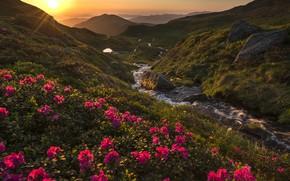 Picture the sun, rays, landscape, sunset, mountains, nature, stream, stones, Romania, rhododendrons, Lazar Ioan Ovidiu