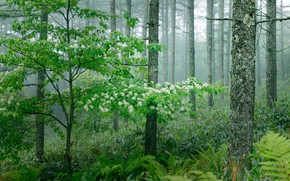 Picture greens, forest, grass, trees, fog, fern, the bushes, flowers