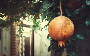 Picture leaves, branch, door, garden, large, fruit, hanging, the fruit, bokeh, garnet, ripe