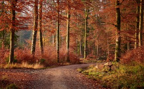 Picture road, autumn, forest, leaves, trees, Park, logs