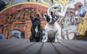 Picture dogs, the city, friends