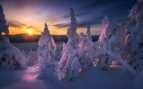 Picture winter, forest, the sky, snow, trees, sunset, mountains, Владимир Ляпин