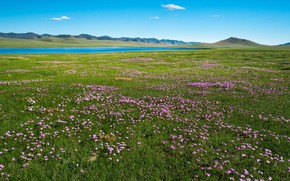 Picture field, summer, grass, flowers, mountains, river, blue, hills, shore, glade, spring, meadow, space, pink, pond, …