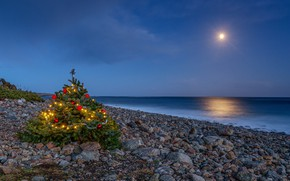 Picture sea, shore, tree
