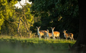 Picture forest, light, nature, foliage, deer, the herd, calves