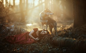 Picture forest, girl, light, wolf, dog, lies, red dress