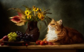 Picture autumn, cat, cat, look, flowers, pose, the dark background, table, bouquet, red, grapes, lies, pitcher, …