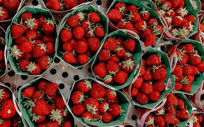 Picture berries, strawberry, a lot, trays, boxes