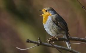 Picture bird, branch, beak