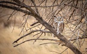Picture tree, owl, bird