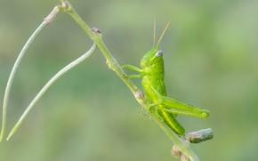 Picture background, grasshopper, Fleur Walton