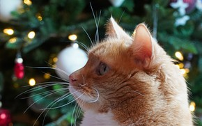 Picture muzzle, bokeh, Christmas tree, red cat
