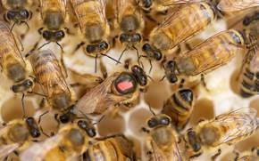 Picture beehive, bees, Fleur Walton
