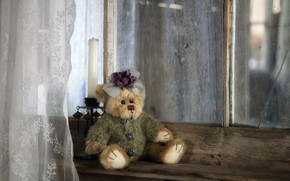 Picture toy, window, bear, naturalism