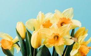 Picture flowers, spring, yellow, tulips, fresh, yellow, flowers, tulips, daffodils, spring