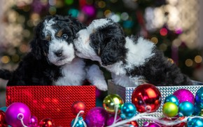 Picture balls, glare, puppies, Christmas, New year, kids, a couple, Duo, packages, faces, doggie, Бернедудель