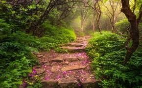 Picture trees, landscape, nature, fog, Park, petals, track, stage