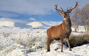 Picture winter, landscape, deer