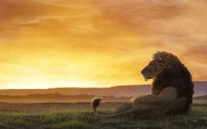 Picture Sunset, The sun, Figure, Cat, Leo, Africa, Predator, Mane, Art, Art, Predator, Sun, Sunset, Cat, …
