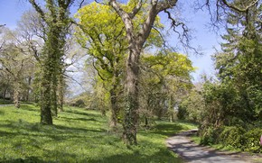 Picture road, trees, nature, green leaves