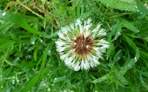 Picture the rain, dandelion, may