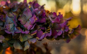 Picture flowers, nature, color