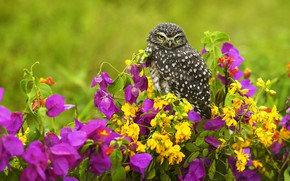 Picture summer, flowers, owl, bird, yellow, pink, lilac, owl, bougainvillea