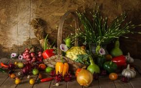 Wallpaper harvest, still life, vegetables, autumn, still life, vegetables, harvest