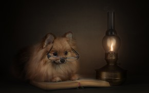 Picture animal, lamp, dog, glasses, book, dog, Spitz