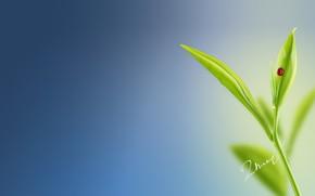 Picture macro, nature, ladybug, minimalism, a blade of grass
