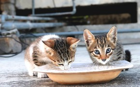 Picture road, cat, cat, look, face, pipe, kitty, background, street, milk, plate, pair, kittens, kitty, a …