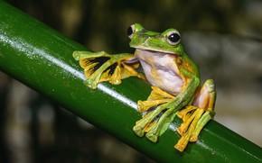 Picture look, macro, pose, background, frog, legs, stem, green, wood