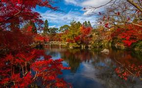 Picture autumn, trees, landscape, the city, pond, Park, Japan, the bridge, Kyoto