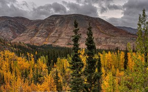 Picture autumn, forest, clouds, trees, mountains, Canada, panorama, Banff