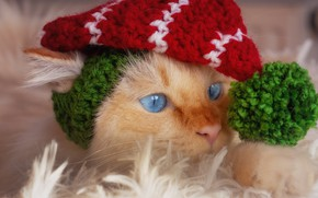 Picture cat, cat, look, face, the game, portrait, red, lies, fur, image, blue eyes, red, cap, …