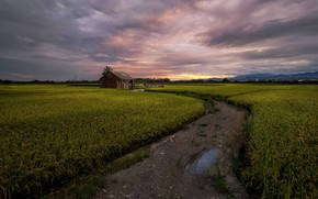 Picture road, field, house
