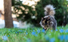 Picture cat, summer, cat, look, flowers, pose, background, glade, garden, walk, bokeh, motley