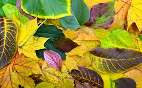 Picture autumn, leaves, background, colorful, wood, background, autumn, leaves, autumn