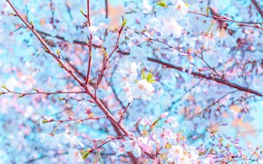 Picture flowers, branches, spring, flowering