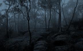 Picture winter, forest, trees, nature, fog, morning, Australia, monochrome
